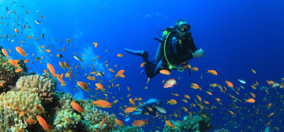 sinai peninsula dive site description for scuba divers sinai sharm